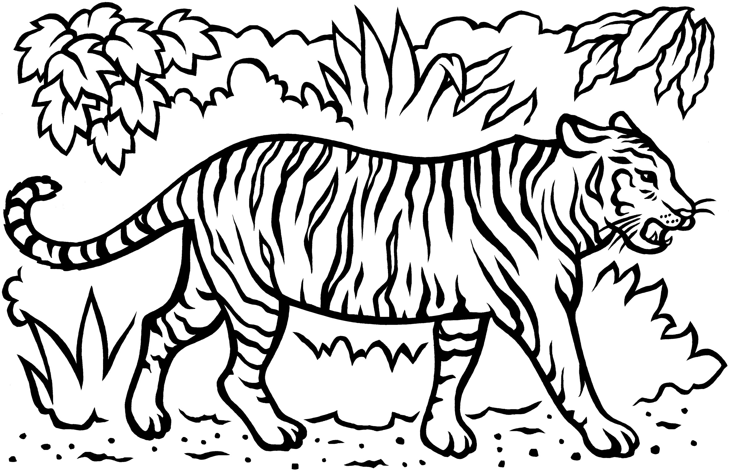 Free Coloring Pages Of Sumatran Tiger Tiger Coloring Pages